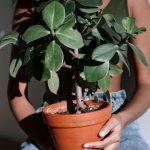 Jedes Zimmer braucht eine Zimmerpflanze